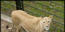 Løver i Ree Park