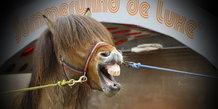 Weelnes for heste 04.04.2012 galleri 2