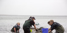 Muslingejagt ved Ballehage Strand