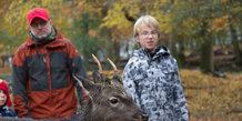 Smag på Aarhus: En hjort i dyrehaven
