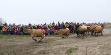 Køerne dansede på Karensminde