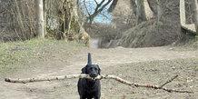 Stem på den sødeste hund